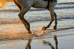 Beachside sunset horse ride. An early morning horse ride at the edge of a beautiful beach with crystal clear water with white gentle waves Royalty Free Stock Photo