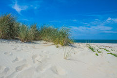 Beachside Zeeland. With cloudy sky royalty free stock photo