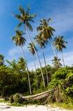 Beachsidepalmen tegen blauwe hemel Royalty-vrije Stock Afbeeldingen