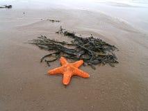 beachstar 库存图片