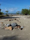 Beachstones Stockfoto