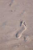 beachwalk Royaltyfri Foto