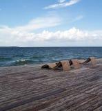 Beachwalk Royalty-vrije Stock Afbeelding