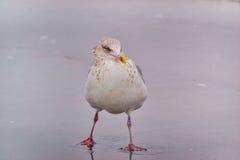 Beachy птица стоковое фото