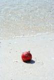 beachy рождество Стоковая Фотография