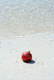 beachy jul Arkivbild