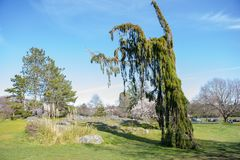 Beacon Hill Park during the spring in Victoria, Vancouver Island stock photography