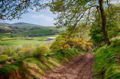 Beacons Way in Carmarthenshire, Wales. A Wooded Track on the BEacons Way Through Beautiful Countryside in Carmarthenshire, Wales, UK stock photography