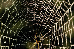Beaded cobweb Royalty Free Stock Photography