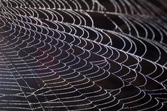 Beaded Spider Web. Spider Web Beaded With White Water Drops royalty free stock image