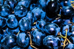 Beads of black grapes Royalty Free Stock Photography