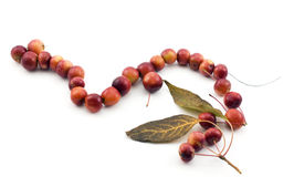Beads made of apples Royalty Free Stock Photography