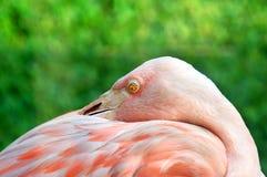Beady Eye Stock Images