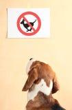 beagle Стоковое Изображение