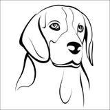 beagle Fotografia Stock Libera da Diritti