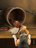 Beagle bawić się łowieckiego psa Zdjęcia Royalty Free