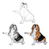 Funny pose of beagle Royalty Free Stock Image