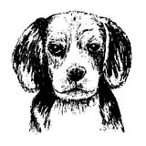 Beagle. Black and white beagle , hand draw vector Royalty Free Stock Images