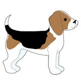Beagle Royalty Free Stock Images