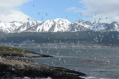 The Beagle channel separating the main island of the archipelago of Tierra del Fuego and lying to the South of the island. Royalty Free Stock Images