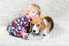 Beagle and a child Stock Image