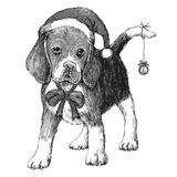 Beagle with christmas hat Royalty Free Stock Photography