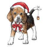 Beagle with christmas hat Royalty Free Stock Photo