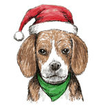 Beagle with christmas hat Royalty Free Stock Images