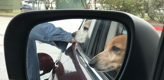 2 dogs in the car royalty free stock photos