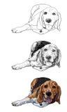 Beagle de mentira stock de ilustración