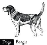 Beagle del estilo del bosquejo del perro Fotografía de archivo