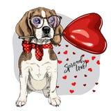 Beagle dibujado mano con el baloon de la forma del corazón Tarjeta de felicitación del día de San Valentín del vector El perro co imagen de archivo
