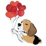 Beagle Dog with Balloons Royalty Free Stock Image