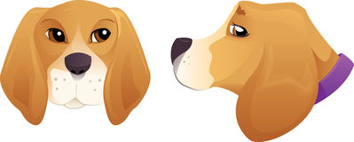 Beagle dog head Royalty Free Stock Image
