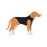 Beagle Dog - Vector color illustration Royalty Free Stock Photos
