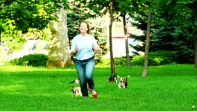 Beagle dogs running across the grass summer day stock footage