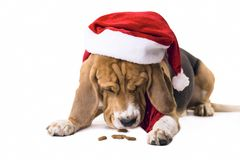 Beagle en el sombrero de Santa Claus Imágenes de archivo libres de regalías