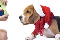 Beagle en el sombrero de Santa Claus Imagen de archivo libre de regalías