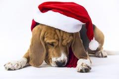 Beagle en el sombrero de Santa Claus Imagen de archivo