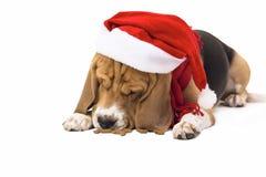 Beagle en el sombrero de Santa Claus Imagenes de archivo