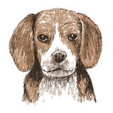 Beagle hand drawn. Image of beagle , hand draw vector on white background Royalty Free Stock Images