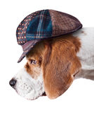 Beagle in hat Royalty Free Stock Photos
