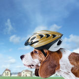 Beagle in  helmet Royalty Free Stock Photography