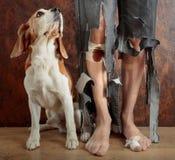 Beagle och hans ägare i sönderrivna flåsanden och biten fot arkivfoton