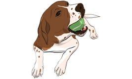 beagle pies bawić się tenisową piłkę Fotografia Royalty Free
