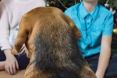 Beagle pies i dzieci dla bożych narodzeń egzekucja rozkazy Zdjęcia Royalty Free