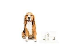 Beagle pies z papieru domu modelem Fotografia Royalty Free