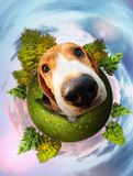 Beagle puppy fun portrait Royalty Free Stock Photos