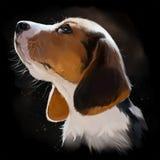 Beagle puppy portrait watercolor painting. Beagle puppy portrait watercolor black background Stock Images