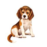 Beagle puppy siting over white Royalty Free Stock Photo
